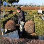 高崎市営八幡霊園でお墓の工事が始まりました。