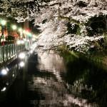 夜桜撮影をしました、群馬県高崎市にて。