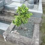 高崎市井出町の大円寺様にて、お墓の改修工事(リフォーム)です。